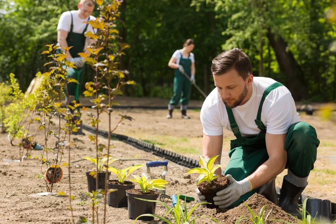 entretien jardin public