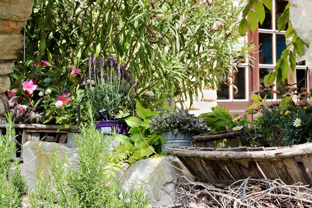 Découvrir et aménager un jardin dit méditerranéen
