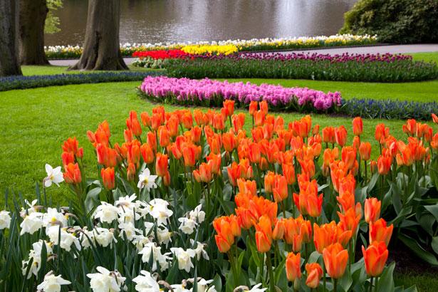 jardin public embellissement