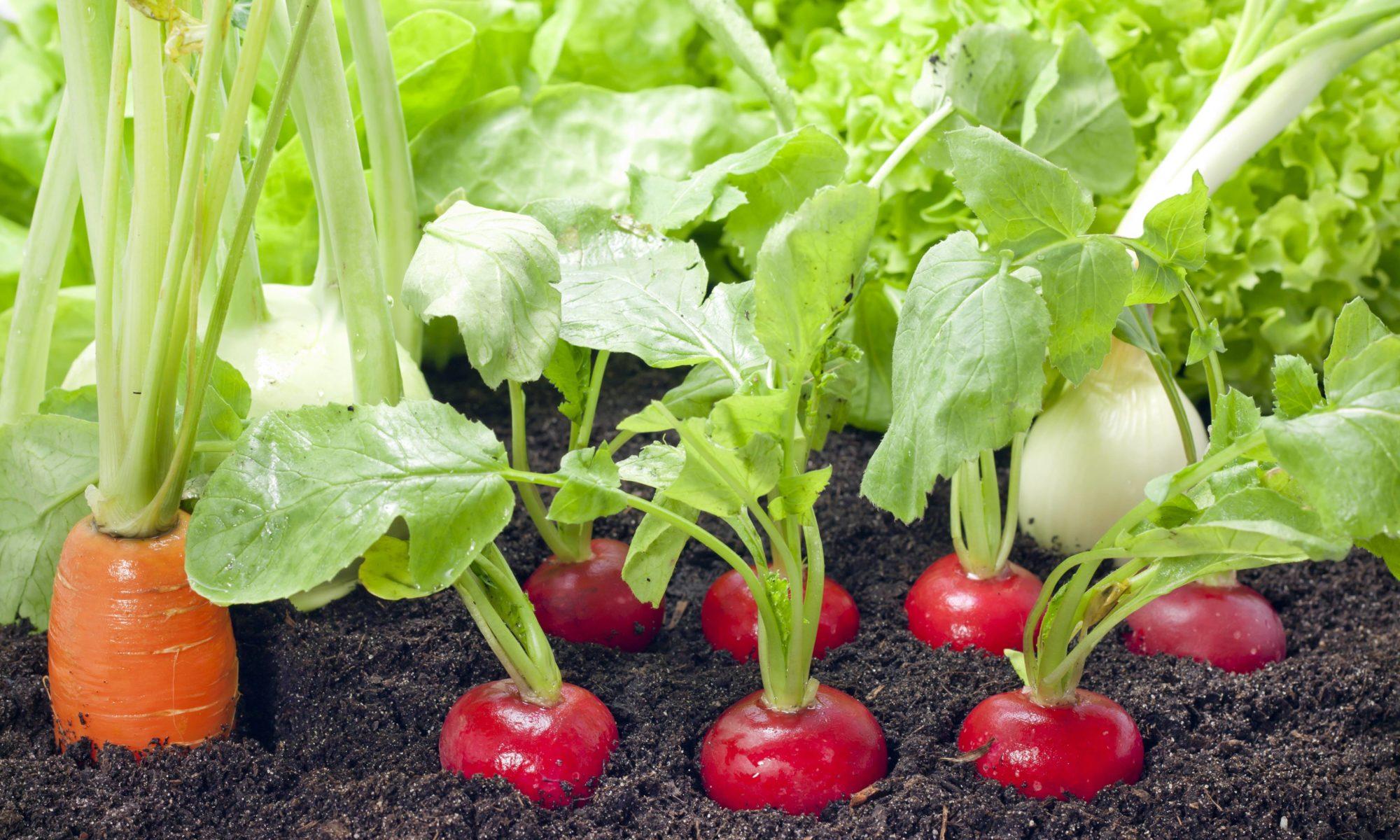 cultiver selon les saisons